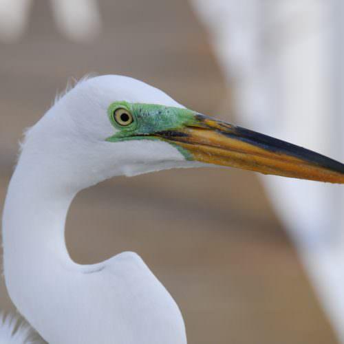 photo_birding